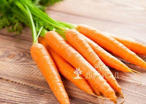 Как поливать морковь в открытом грунте