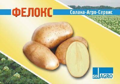 Сорт картофеля «репанка»: характеристика, урожайность, отзывы и фото