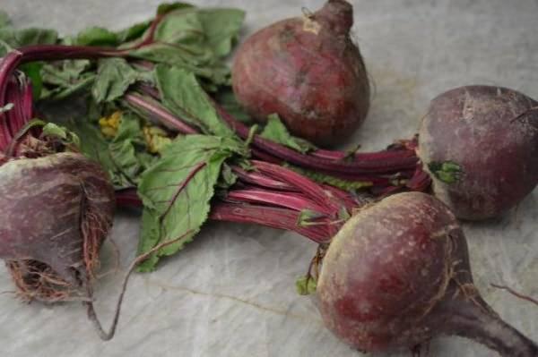 Лучшие сорта свеклы для урала: как выбрать семена, какие подходят для длительного хранения, а также описание овощей с их фото