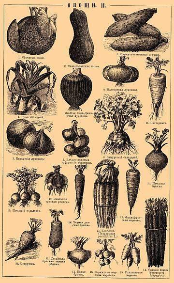 Огород весной и летом: обработка от вредителей и защита овощей. защита от вредителей на дачном участке
