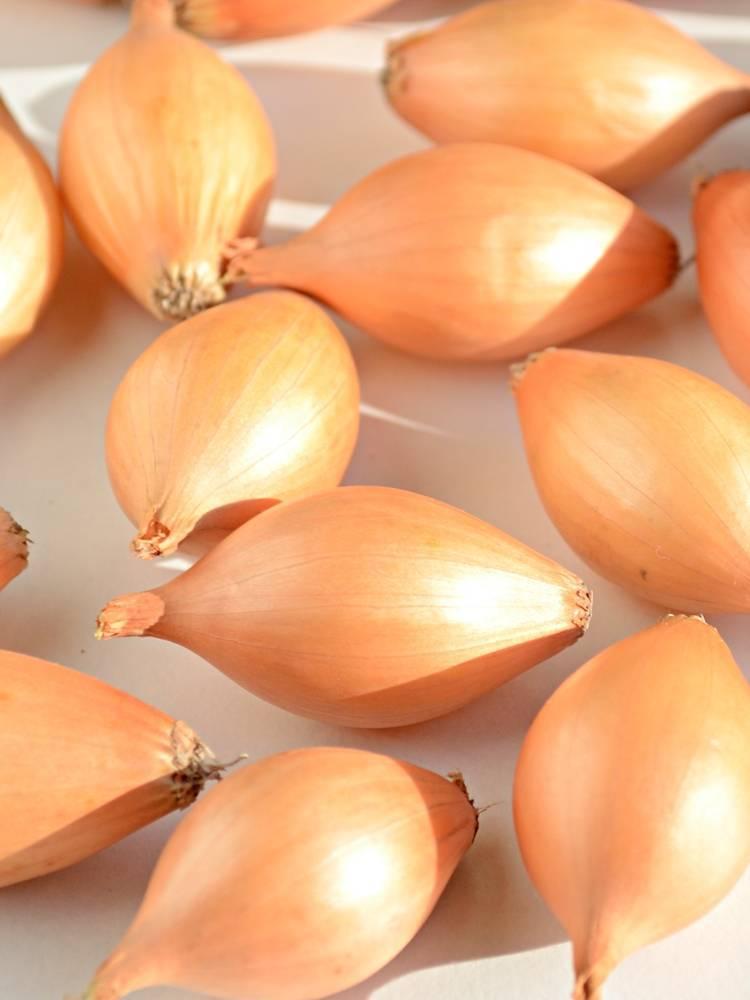 Сорта лука из семян за один сезон - подробный обзор + правила выращивания!