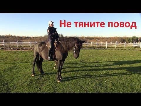 Как научиться ездить галопом на лошади: виды езды, основные правила