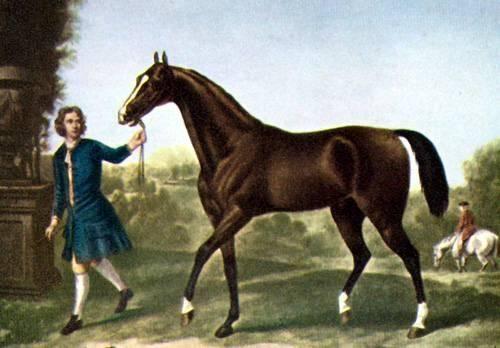 Арабская чистокровная лошадь — википедия