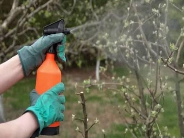 Чем полить дерево, чтобы оно быстро засохло?