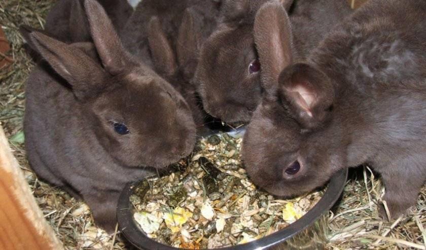Почему дохнут кролики: основные причины и заболевания