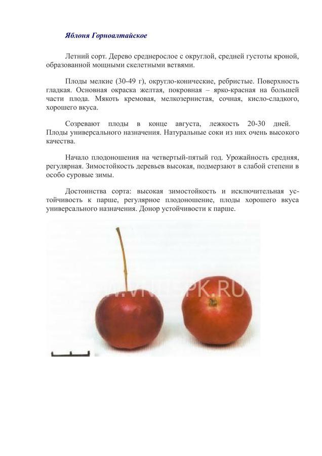 Яблоня голубок алтайский: особенности сорта и ухода