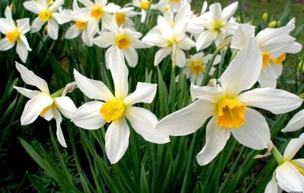 Холодостойкие и морозостойкие однолетники, растения и цветы для сада