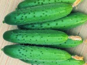 Партенокарпический сорт огурцов, что это такое - особенности, самые урожайные сорта