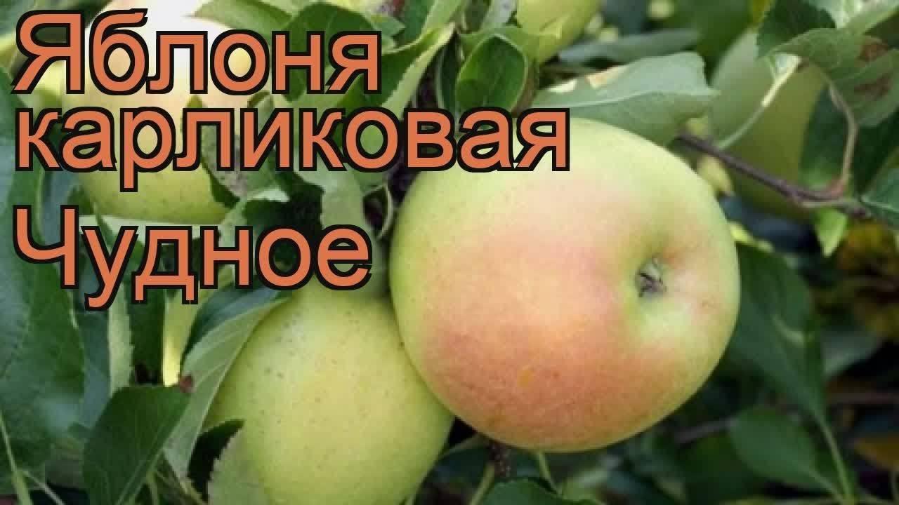 Сорта карликовых яблонь: посадка и уход (пошаговое руководство, описание)