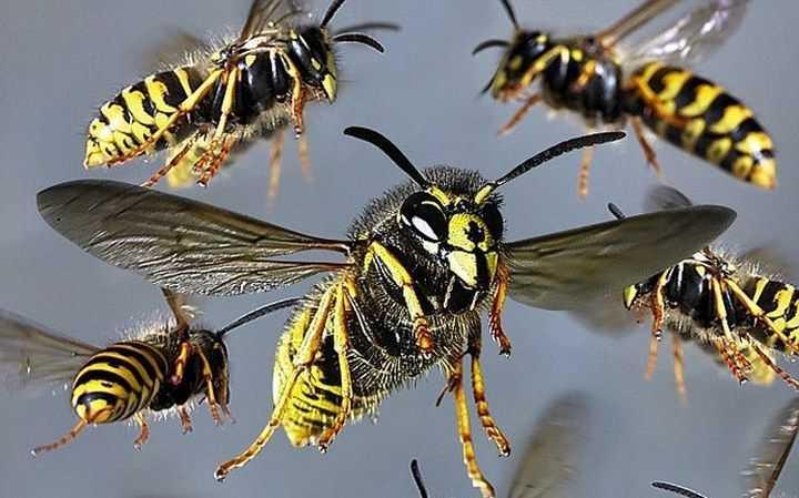 Как отравить пчел и выгнать из деревянного дома?