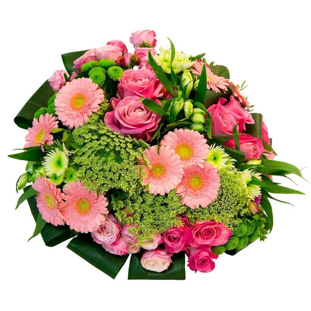О хризантемах больших (крупноцветковых): характеристики, посадка и уход