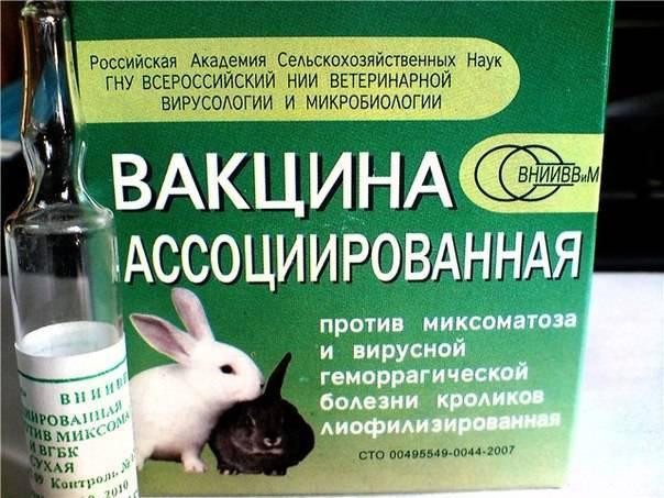 Какие прививки делают кроликам и в каком возрасте