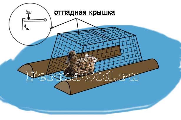 Как поймать утку