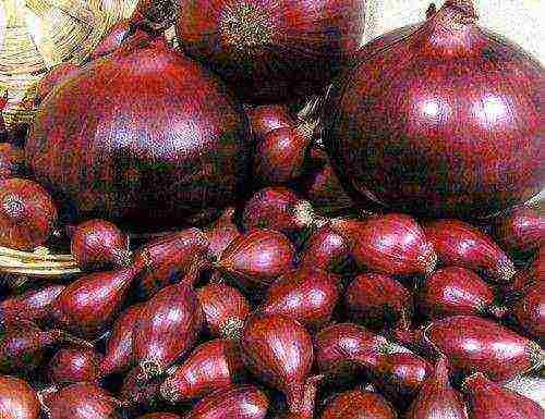 Полезные свойства и отличия красного и белого лука