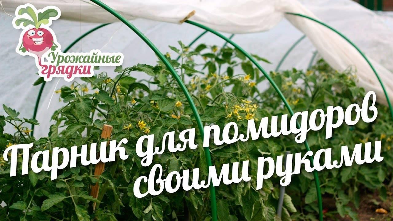 Пошаговая инструкция выращивания помидор рассадой в теплице