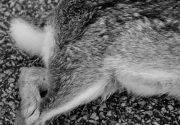 Паралич задних лап у кролей — решаем проблему правильно!