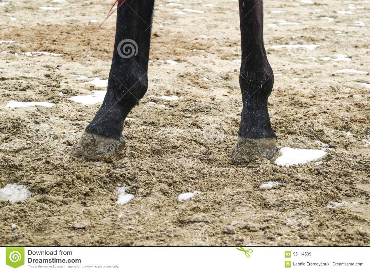 У лошади ноги или копыта как правильно