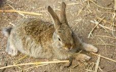 Как помочь кроликам в жару — 6 эффективных способов