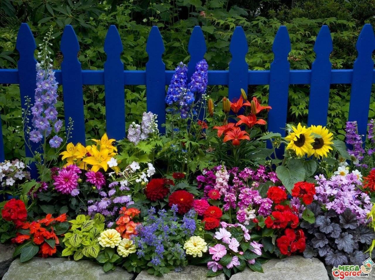 Тенелюбивые и теневыносливые растения для сада