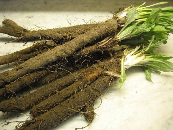 Сорта черной моркови