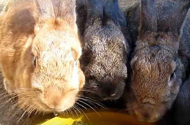 Кормление кроликов какие ветки можно кролику