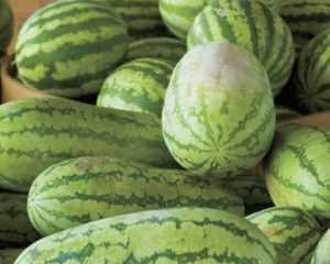 Сорт арбуза астраханский