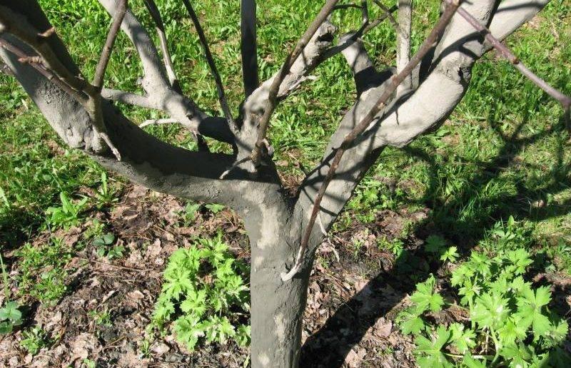 Есть вопрос: чем обработать яблоню и грушу от болезней и вредителей в апреле?