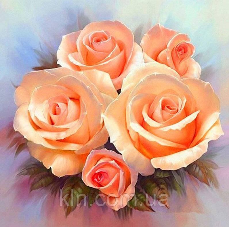 О видах коралловых роз: коралловый сюрприз, coral drift, желе, корал риф    розы дрифт сорта