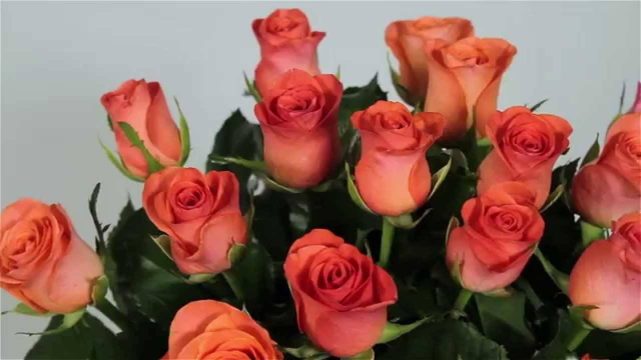 Язык цветов розы — что они символизируют