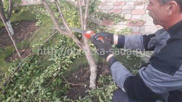 Обрезка деревьев весной: как правильно? как обрезать деревья весной