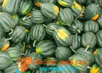 10 самых сладких сортов тыквы