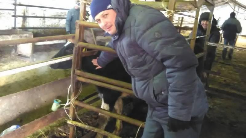 Туберкулез крупного рогатого скота: принципы профилактики