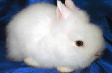 Содержание кроликов в домашних условиях. декоративные кролики: уход и содержание
