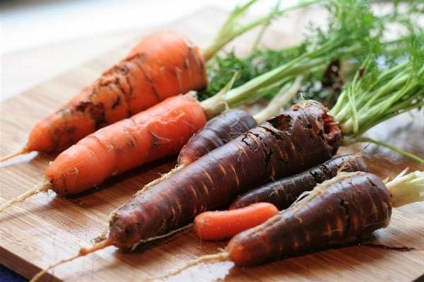 Морковная муха: как избавиться? как правильно бороться с ней?