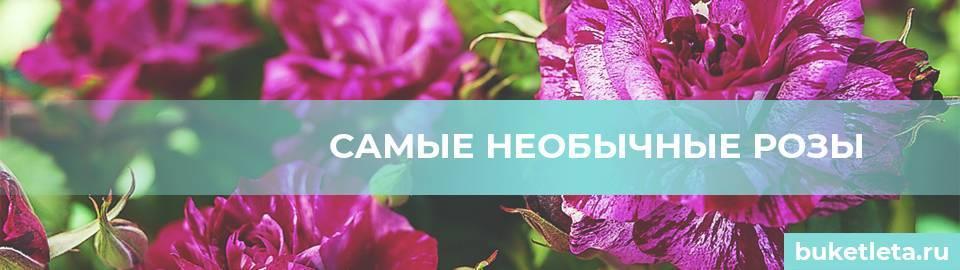 Цветок на миллион – 5 самых дорогих цветов в мире