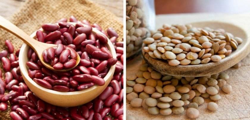 Разница между зерновыми и бобовыми
