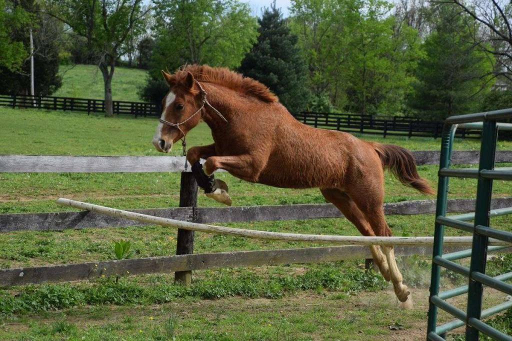 Кастрированный конь: определение, название, причины, специфические особенности ухода и содержания мерина