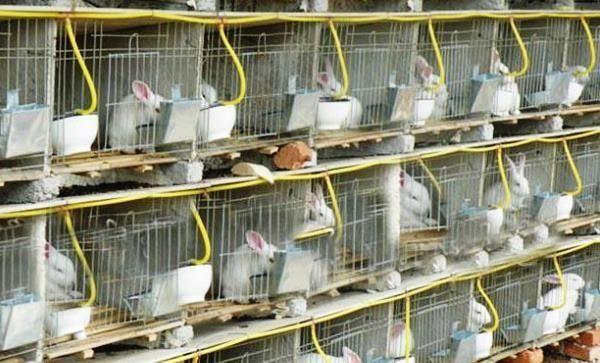 Поилка для кроликов: виды и изготовление