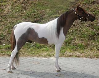 10 известных пород лошадей