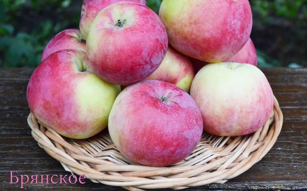 Такая разная яблоня брянское: золотистое, алое, розовое