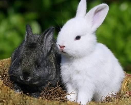 Можно ли кормить кроликов горохом: как давать его стручки, бобы и ботву от него?