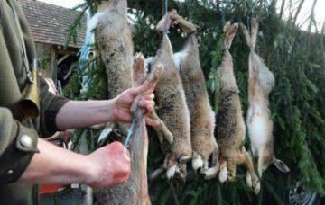 Как правильно забить кролика