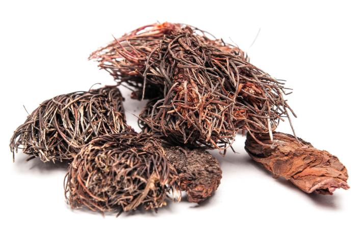 Красная щетка — уникальное целебное растение