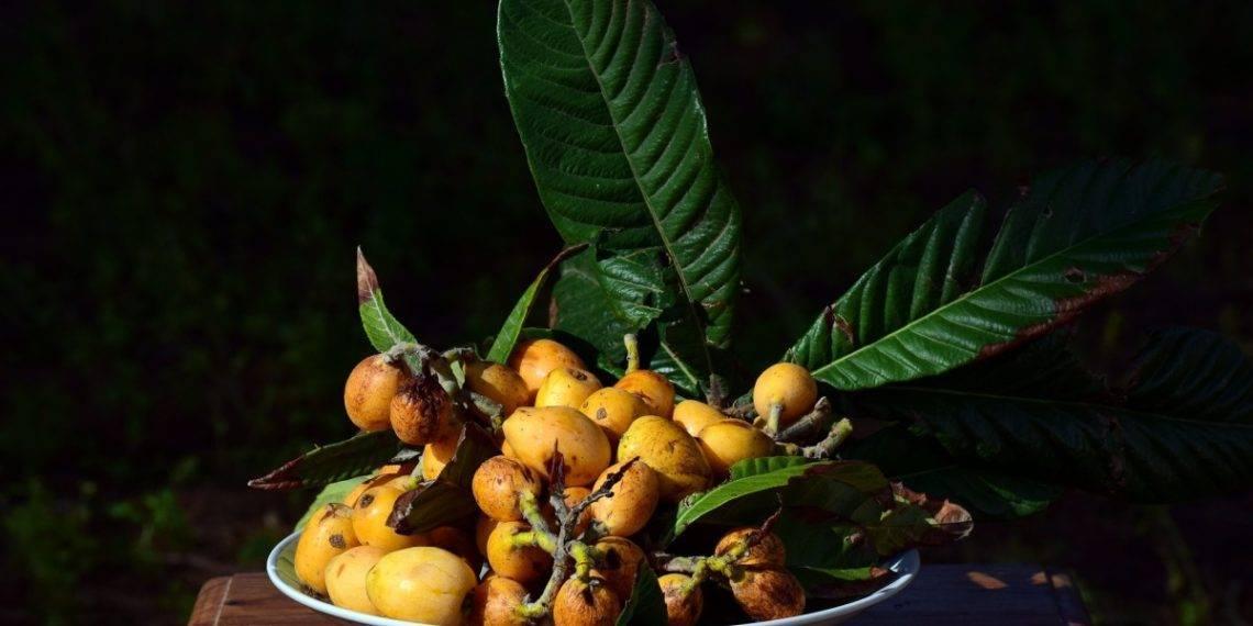 Кабачки - посадка и уход в открытом грунте, секреты богатого урожая