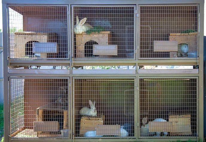 Клетки для кроликов – как выбрать и сделать своими руками, где поставить, правила дезинфекции