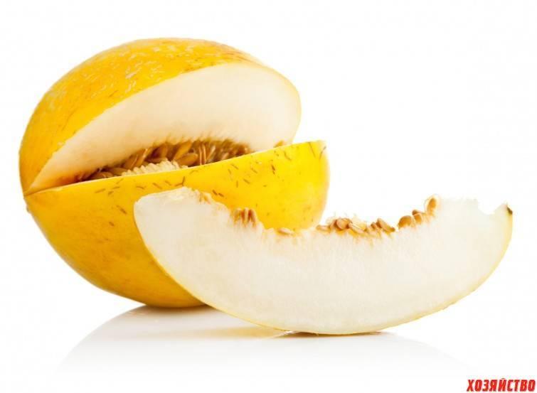 Дыня это ягода или фрукт? особенности выращивания и полезные свойства дыни (115 фото)