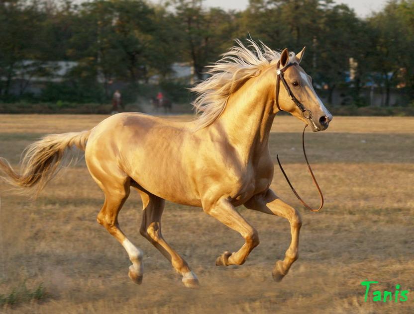 Донская лошадь — википедия переиздание // wiki 2