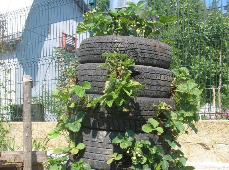 Выращивание огурцов в мешках: инструкция для начинающих и секреты профессионалов (95 фото)