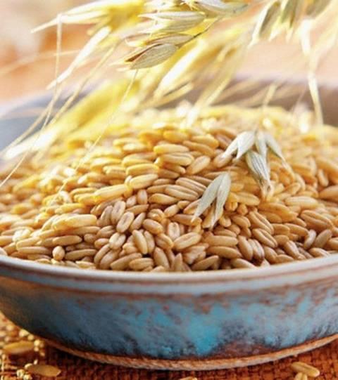 Можно ли пшеницу кроликам, в каком виде давать