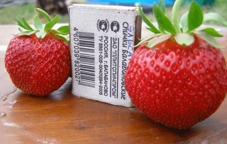 Земляника садовая - лучшие сорта, выращивание в открытом грунте